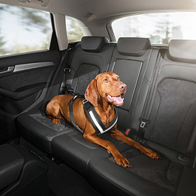 Audi Hondengordel, maat S (tot ca. 15kg)