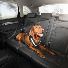 Audi Hondengordel, maat L (ca. 30 - 50kg)