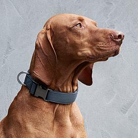 Porsche Honden halsband